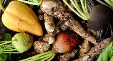 Recettes végétariennes faciles avec les fruits et légumes de novembre
